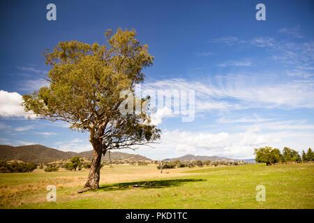 Allans Flat Landscape Australia - Stock Photo