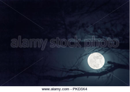 moon glowing between branches of a tree - Stock Photo