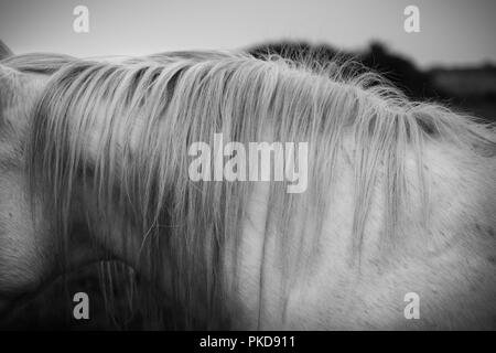 The side view of the mane and neck of a white horse standing in a field outside. - Stock Photo