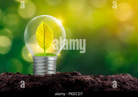 The bulb is located on the inside with leaves forest and the trees are in the light. Concepts of environmental conservation and global warming plant g - Stock Photo