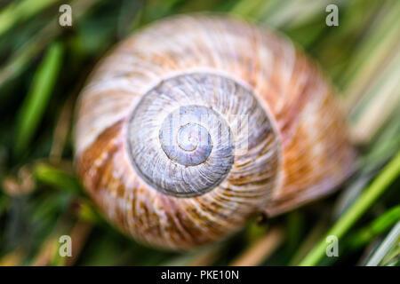 snail housing in grass - Stock Photo