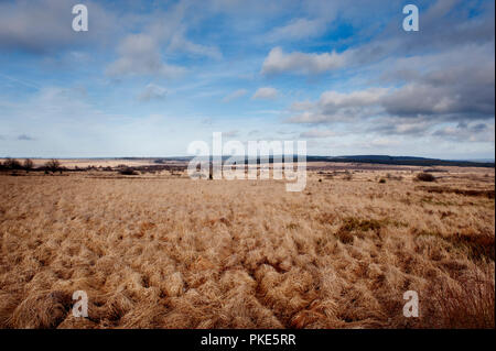 Impressions of the broad plateau of the High Fens around Weismes and the Signal de Botrange, the largest nature reserve in Belgium (Belgium, 23/02/201 - Stock Photo