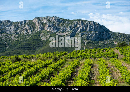 Fields of vineyards around the village of Tautavel in the Languedoc region in Southeastern France; Tautavel, Languedoc, France - Stock Photo