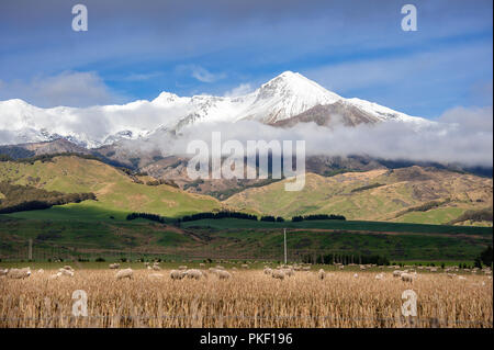 Mountain landscape with sheep grazing,  Te Anau, New Zealand. Picturesque view, snow capped mountains, sunlit slopes and blue sky background - Stock Photo