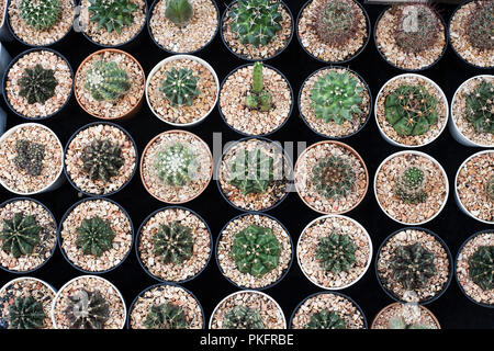 Many different cacti in flowerpots mix selling in store, top view. Garden center with lot potted small cactus plants sale on flower market - Stock Photo