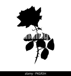 Black Silhouette of Rose illustration. Barbed flower with leaves. Rose Sign. Garden flower. Postcard, logo, cover, tattoo floral design element. Vector isolated on white background - Stock Photo