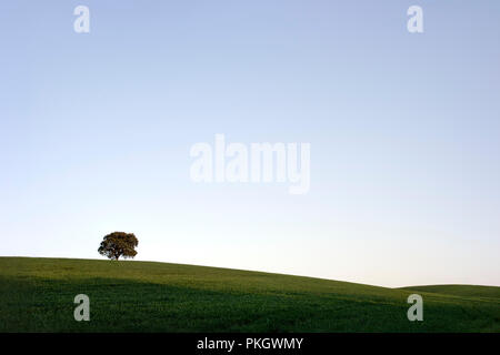 Typical Alentejo plain landscape, south of Portugal - Stock Photo