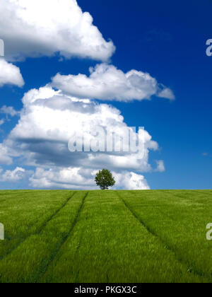 Agricultural landscape, Puy de Dome department, Auvergne, Rhone Alpes, france - Stock Photo