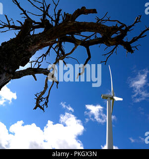 View from below of the top of a dead tree and  a wind turbine on a background of blue sky, Puy de Dome department, Auvergne Rhone Alpes, Fran - Stock Photo