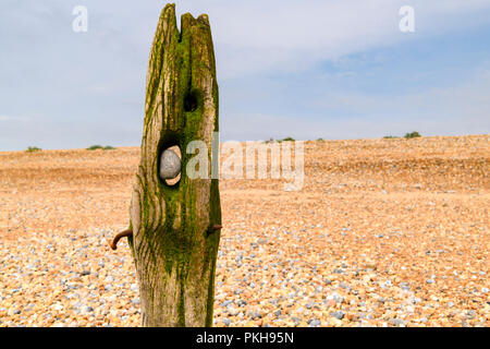 Naturally shaped old sea defences at Rye Bay, East Sussex, England. 30 August 2018 - Stock Photo