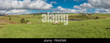 North Pennines AONB panoramic landscape, Forest in Teesdale from Cronkley, Upper Teesdale, UK in strong early autumn sunshine - Stock Photo
