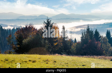 wonderful autumn landscape. trees on the grassy hill. distant valley in glowing fog - Stock Photo