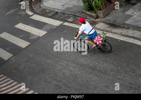 A woman carrying a bunch of pink lotus on her bicycle in the morning in Hanoi Old Quarter, Vietnam. - Stock Photo