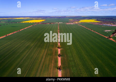 Aerial view of Wheat Crop, Midwest, Western Australia - Stock Photo