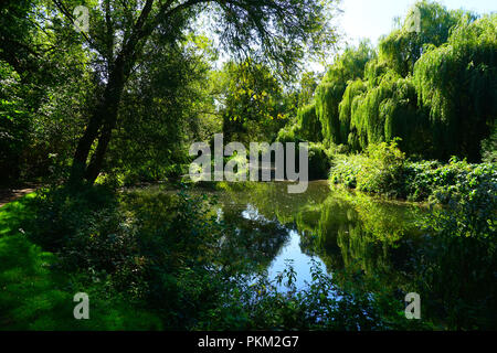 The River Stort near Bishops Stortford (landscape) - Stock Photo