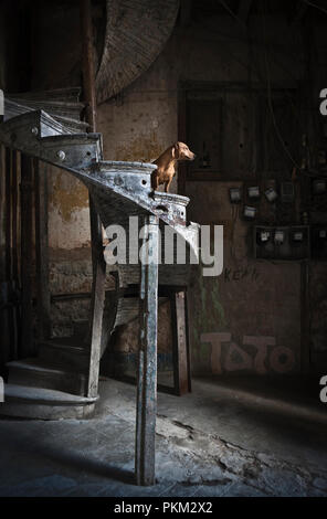 Havana, Cuba. 22nd January 2013. A dig sits on a spiral staircase in an apartment building in Havana, Cuba. - Stock Photo