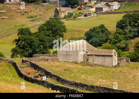 UK, Yorkshire, Wharfedale, agriculture, Barden, cows resting in green lane beside stone field barn in sunshine - Stock Photo
