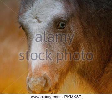 A blue eyes foal - Stock Photo