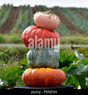 Pumpkins and squash from an early fall harvest on the Saanich Peninsula. - Stock Photo