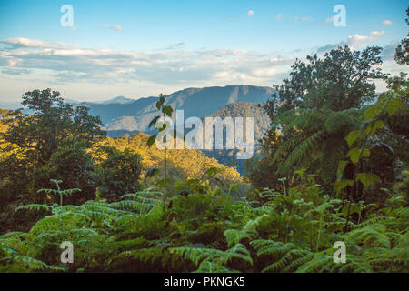 View of steep and forested peaks of Great Dividing Range rising into blue sky near Dorrigo in northern NSW Australia - Stock Photo