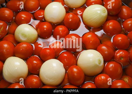 fresh tomatoes and bulbs in water - Stock Photo