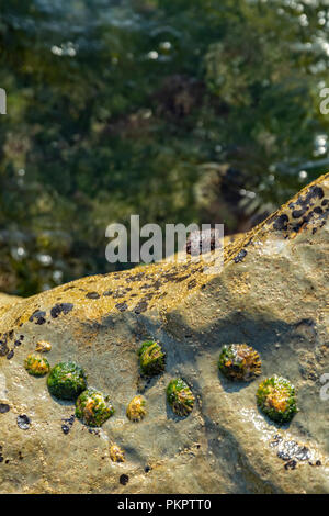 Oceanic pools with seaweed and rocks and marine life. Seen from above. - Stock Photo