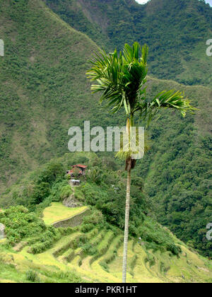 Sustainable Development Goals: forested mountains and terraced paddy fields in the mountains around Banaue and Batad, northern Luzón, The Philippines - Stock Photo