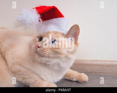 Cat christmas, Kitten is playing with a christmas ball - Stock Photo