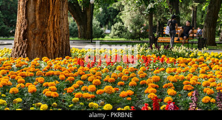Images of Таттыбюбю ТурсунбаевойPanfilov Square in Bishkek, the wonderful, walkable capital of Kyrgyzstan. - Stock Photo