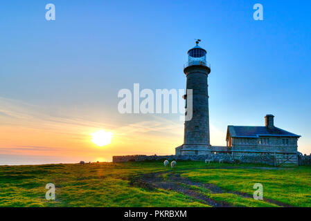 Sheep graze contentedly as the sun sets behind Old Light lighthouse on Lundy Island - Stock Photo