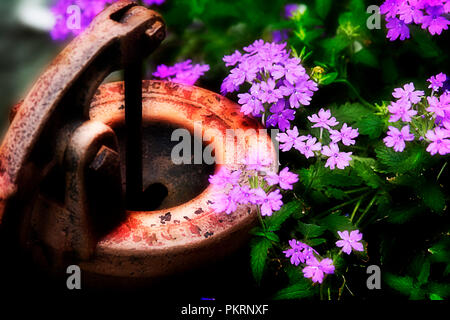 Rustic water pump outdoors surround by purple flowers - Stock Photo