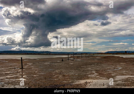 A dark and brooding sky hangs over Jetty Island in Possession Sound north of Everett, Washington State. Seagulls hunt for food on the exposed mud. - Stock Photo