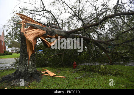 Washington, USA. 14th Sep, 2018. A fallen tree lies on the side of a road near coastline in North Carolina, the United States, on Sept. 14, 2018. At least five people have been killed so far in the aftermath of Hurricane Florence which was downgraded Friday afternoon to a tropical storm with winds of 70 mph (110 km/h) along the U.S. East Coast. Credit: Liu Jie/Xinhua/Alamy Live News - Stock Photo