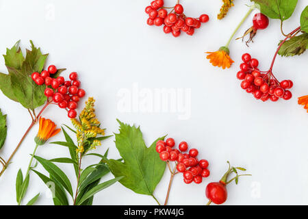 Autumn floral composition. Frame made of autumn plants viburnum berries, orange fresh flowers on white background. Autumn fall natural plants ecology wallpaper concept. Flat lay, top view, copy space - Stock Photo