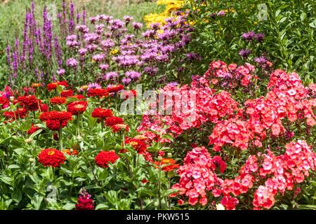 A colorful combination of a summer flower bed in a cottage garden border, Phlox, Zinnias, Salvia, Monarda, beautiful garden flowers - Stock Photo