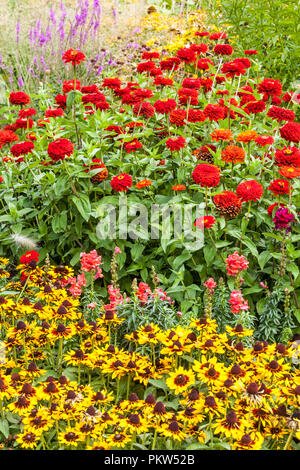 A colorful combination of a summer flower bed in a cottage garden, Rudbeckia hirta Sonora, Red Zinnias - Stock Photo