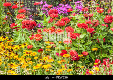 A colorful summer flower bed in a cottage garden, Red Zinnias, Rudbeckia hirta - Stock Photo