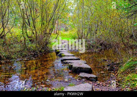 Stepping stones across a stream leading into the woods in the Wild Cat Trail at Newtonmore in the Scottish Highlands