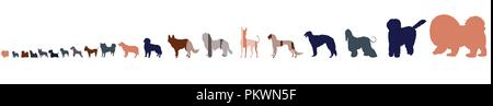 Dog breeds in size order isolated on white background. Twenty dog silhouettes from small to large. - Stock Photo