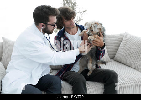 Loving owner with a Yorkshire terrier in the office of a veterinarian - Stock Photo