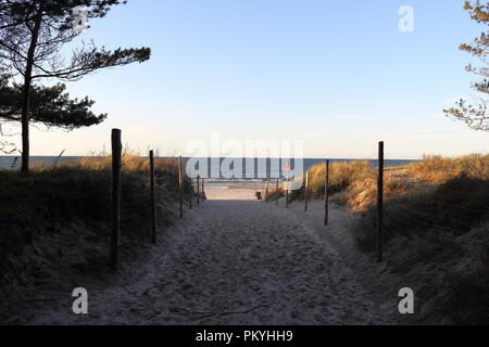 Sandy footpath to the beach and open sea with trees and beach grass in September, just before sunset - Stock Photo