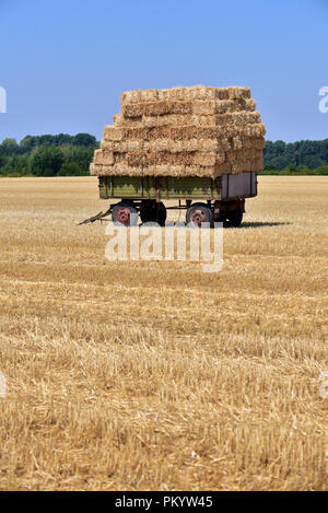 Straw bales on trailer in a field of North Rhine-Westphalia, Germany - Stock Photo
