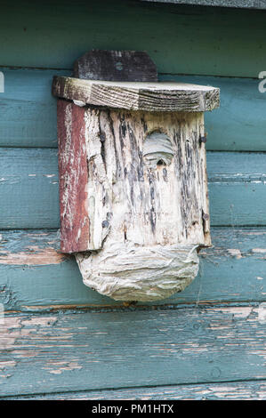Wasp nest that has been built inside a Bird Box on shed. Showing various stages of wasps entering into the nest through the bottom entrance hole. - Stock Photo