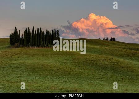 Circle of Cypress trees near Torrenieri in Tuscany, Italy - Stock Photo