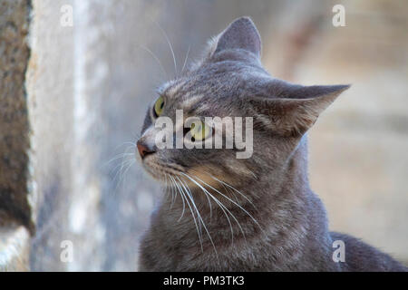 Awesome cute isolated grey cat portrait on street - Stock Photo