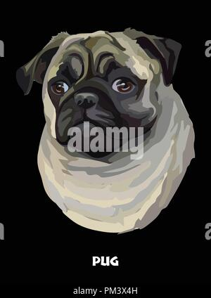 Colored portrait of Pug isolated vector illustration on black background - Stock Photo
