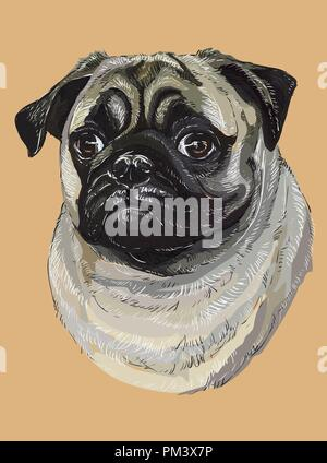 Pug vector hand drawing illustration in different color on beige background - Stock Photo