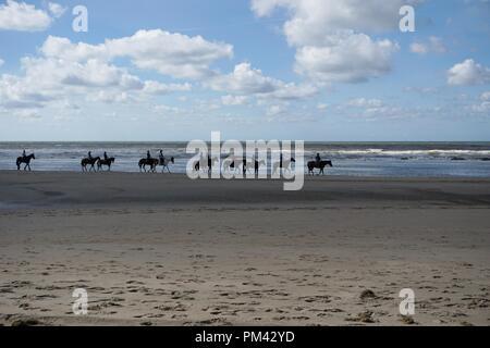 horses at the beach north sea - Stock Photo