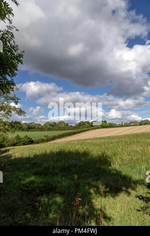 Devon meadow, pasture, paddock, green, pen, grassland, pastureland, sward,maize,cover,meadow, pasture, paddock, green, pen, grassland, pastureland, - Stock Photo