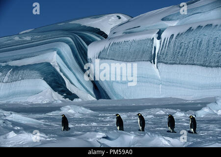 Film Still / Publicity Still from 'March of the Penguins' 2005 © 2005 National Geographic  File Reference # 30736223THA  For Editorial Use Only -  All Rights Reserved